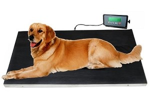 660 lbs VET Veterinary Platform Scale for Animal Pet Dog Cat Livestock w/FREE MAT